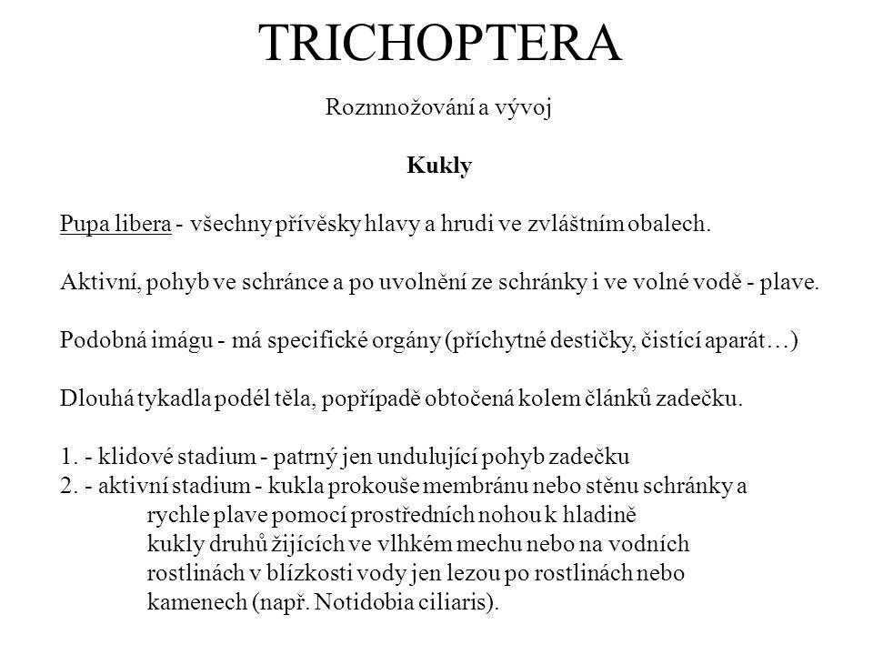 TRICHOPTERA Rozmnožování a vývoj Kukly Pupa libera - všechny přívěsky hlavy a hrudi ve zvláštním obalech. Aktivní, pohyb ve schránce a po uvolnění ze