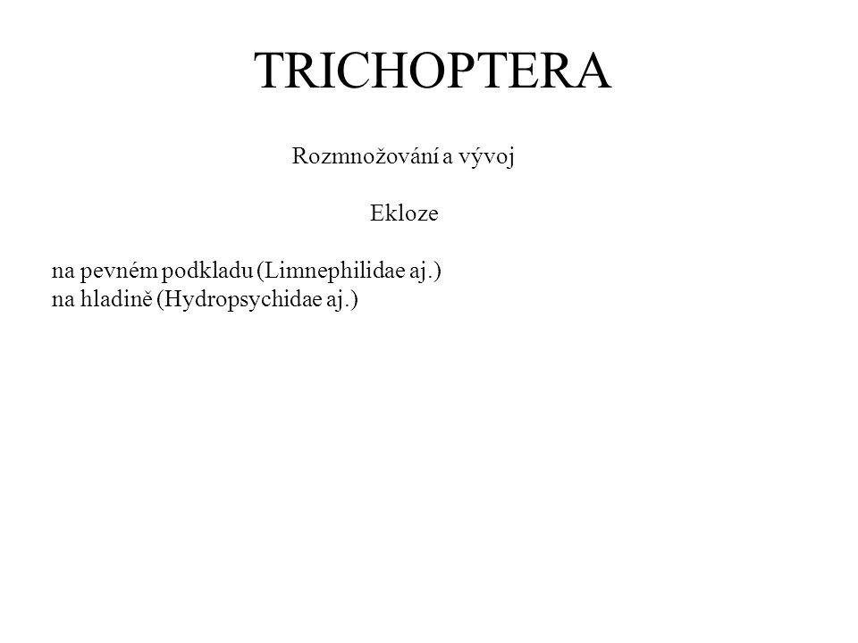 TRICHOPTERA Rozmnožování a vývoj Ekloze na pevném podkladu (Limnephilidae aj.) na hladině (Hydropsychidae aj.)