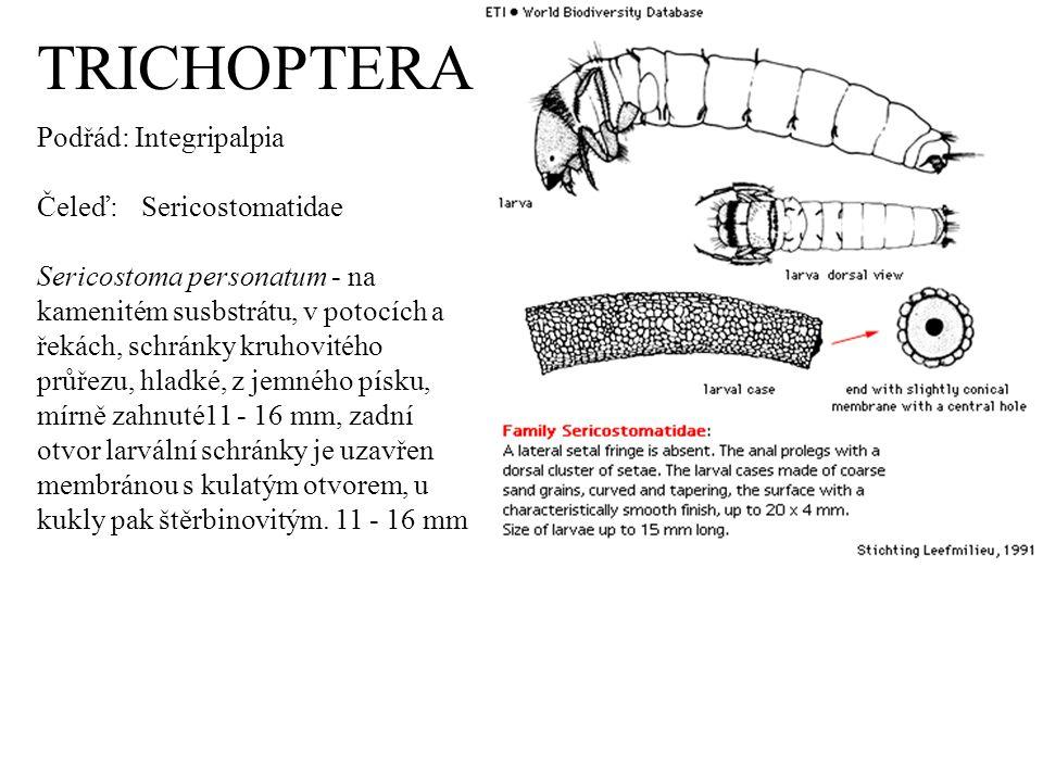 TRICHOPTERA Podřád: Integripalpia Čeleď: Sericostomatidae Sericostoma personatum - na kamenitém susbstrátu, v potocích a řekách, schránky kruhovitého