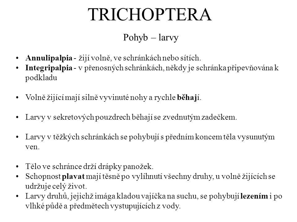 TRICHOPTERA Pohyb – larvy Annulipalpia - žijí volně, ve schránkách nebo sítích. Integripalpia - v přenosných schránkách, někdy je schránka připevňován
