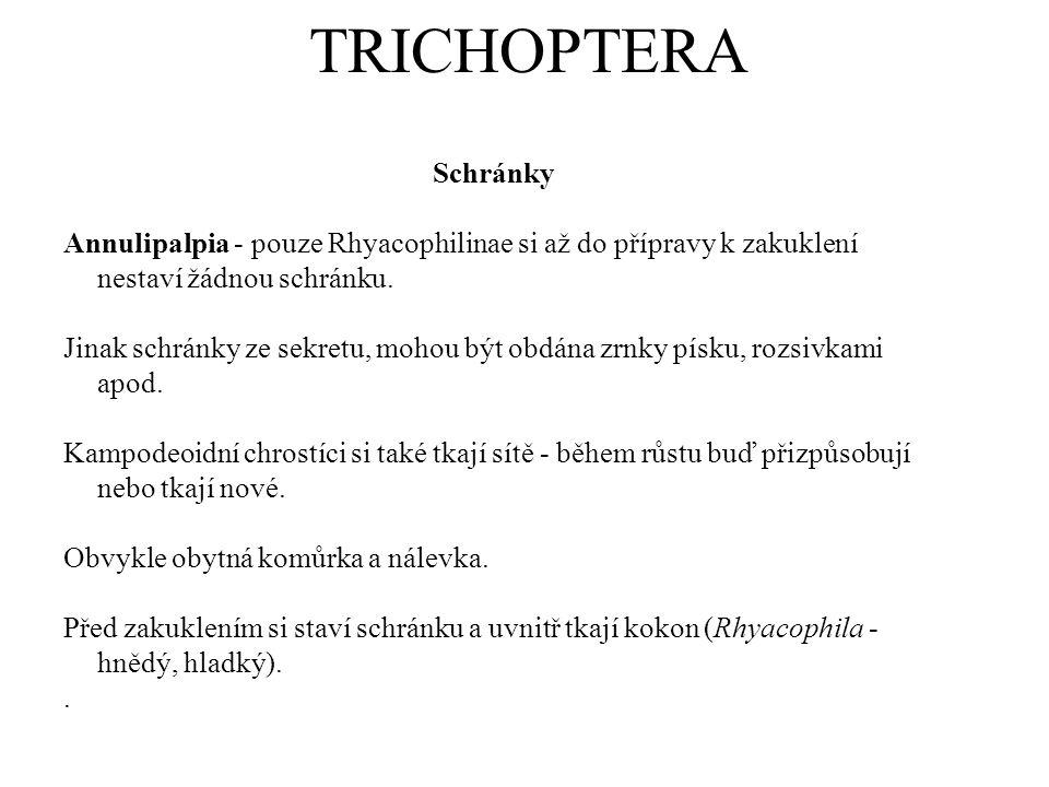 TRICHOPTERA Schránky Annulipalpia - pouze Rhyacophilinae si až do přípravy k zakuklení nestaví žádnou schránku. Jinak schránky ze sekretu, mohou být o