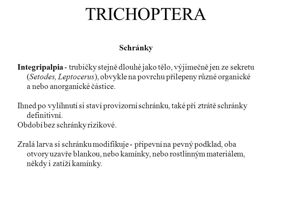 TRICHOPTERA Schránky Integripalpia - trubičky stejně dlouhé jako tělo, výjimečně jen ze sekretu (Setodes, Leptocerus), obvykle na povrchu přilepeny rů