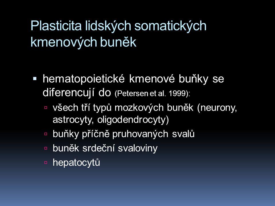 Plasticita lidských somatických kmenových buněk  hematopoietické kmenové buňky se diferencují do (Petersen et al. 1999):  všech tří typů mozkových b