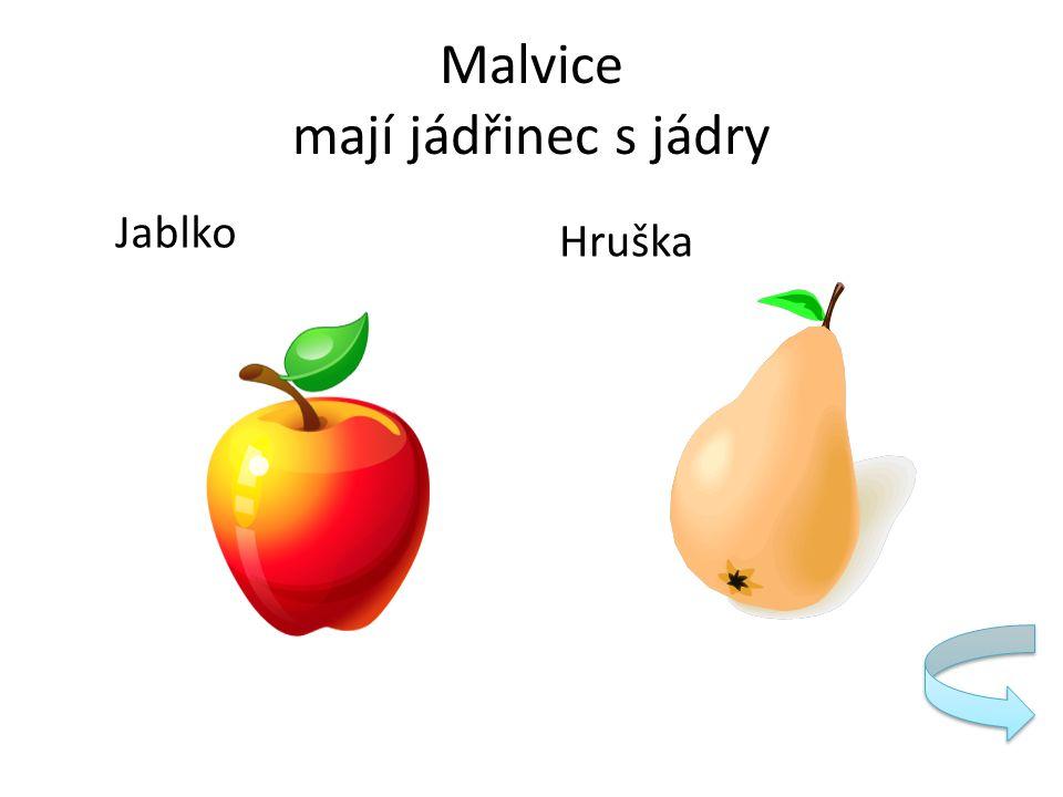 Malvice mají jádřinec s jádry Jablko Hruška