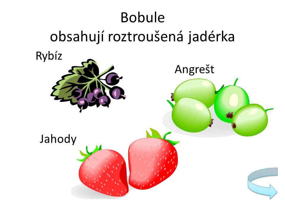 Bobule obsahují roztroušená jadérka Rybíz Angrešt Jahody