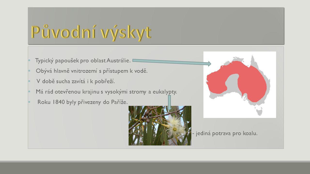  Typický papoušek pro oblast Austrálie.  Obývá hlavně vnitrozemí s přístupem k vodě.  V době sucha zavítá i k pobřeží.  Má rád otevřenou krajinu s