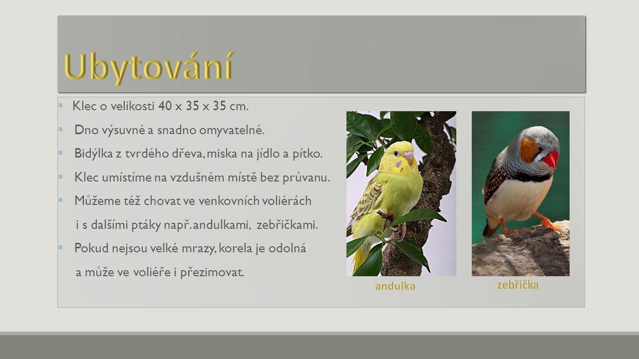  Základem potravy je krmivo pro drobné papoušky.