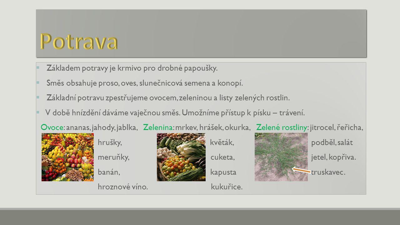  Základem potravy je krmivo pro drobné papoušky.  Směs obsahuje proso, oves, slunečnicová semena a konopí.  Základní potravu zpestřujeme ovocem, ze