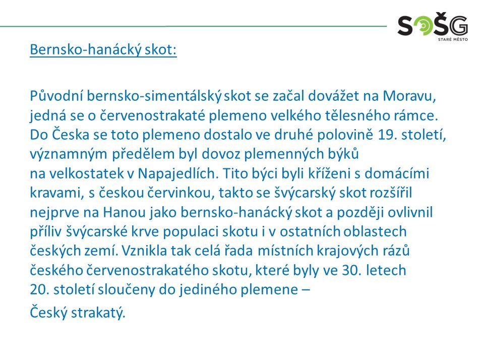 Bernsko-hanácký skot: Původní bernsko-simentálský skot se začal dovážet na Moravu, jedná se o červenostrakaté plemeno velkého tělesného rámce. Do Česk