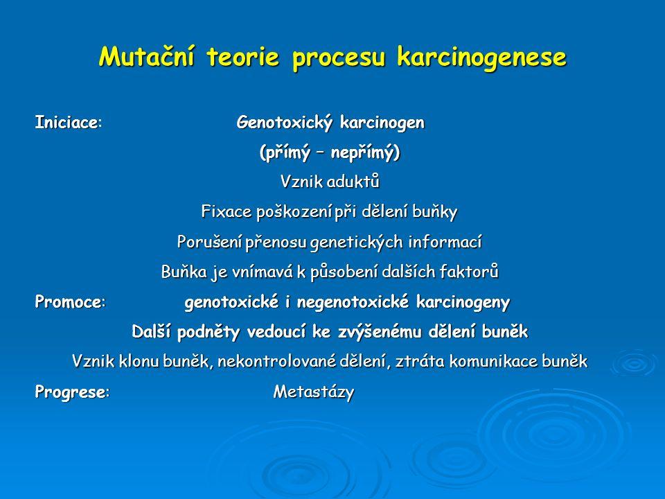 Mutační teorie procesu karcinogenese IniciaceGenotoxický karcinogen Iniciace: Genotoxický karcinogen (přímý – nepřímý) Vznik aduktů Fixace poškození p