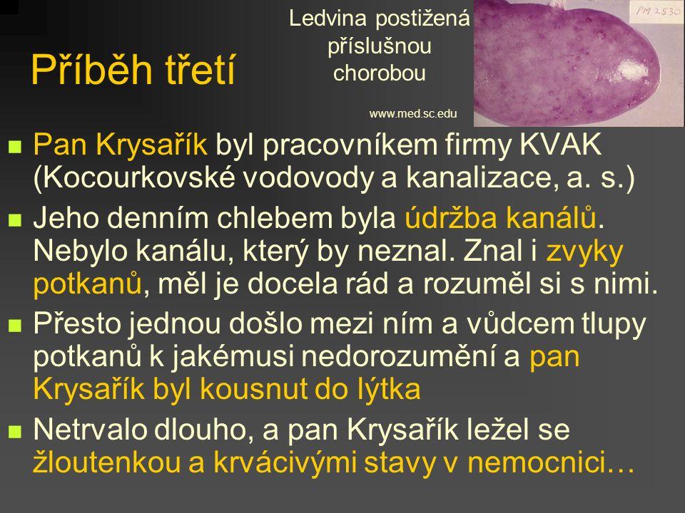 Příběh třetí Pan Krysařík byl pracovníkem firmy KVAK (Kocourkovské vodovody a kanalizace, a. s.) Jeho denním chlebem byla údržba kanálů. Nebylo kanálu