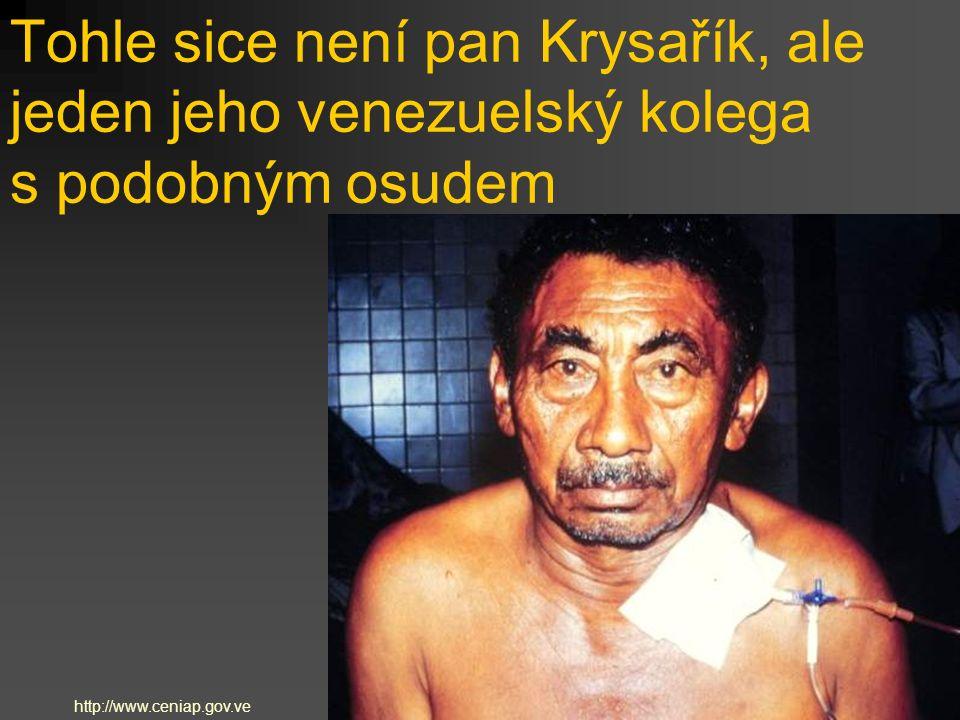 Tohle sice není pan Krysařík, ale jeden jeho venezuelský kolega s podobným osudem http://www.ceniap.gov.ve