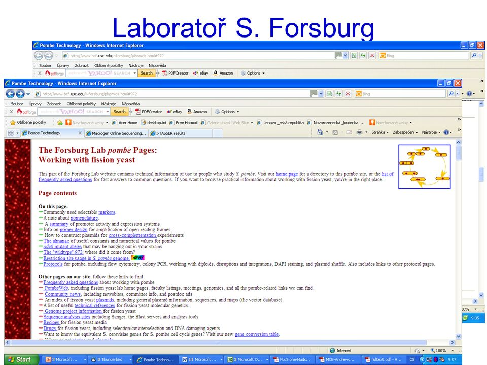 Laboratoř S. Forsburg