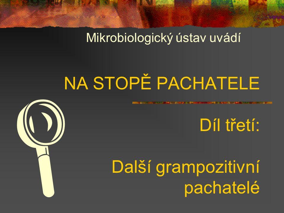 Přehled G+ bakterií PříběhTvarV policejní kartotéce vedeni jako P01 Lékařsky významné Koky Stafylokoky (S.