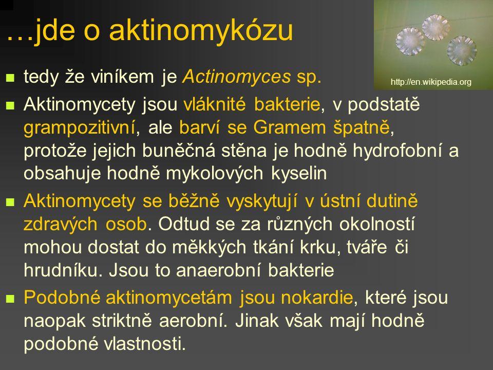 tedy že viníkem je Actinomyces sp. Aktinomycety jsou vláknité bakterie, v podstatě grampozitivní, ale barví se Gramem špatně, protože jejich buněčná s