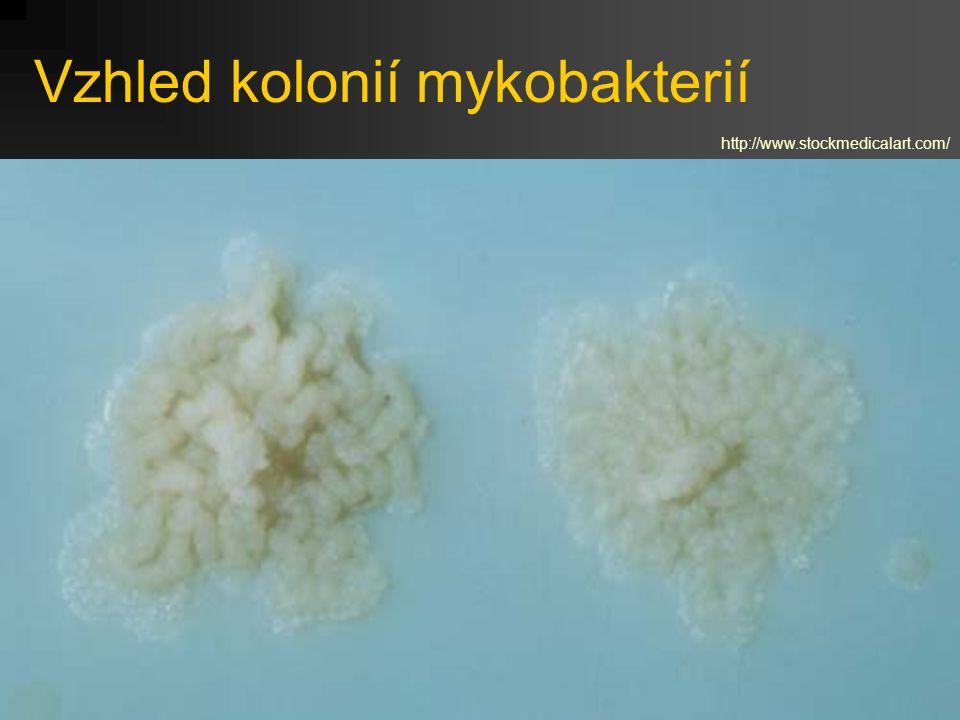 Vzhled kolonií mykobakterií http://www.stockmedicalart.com/
