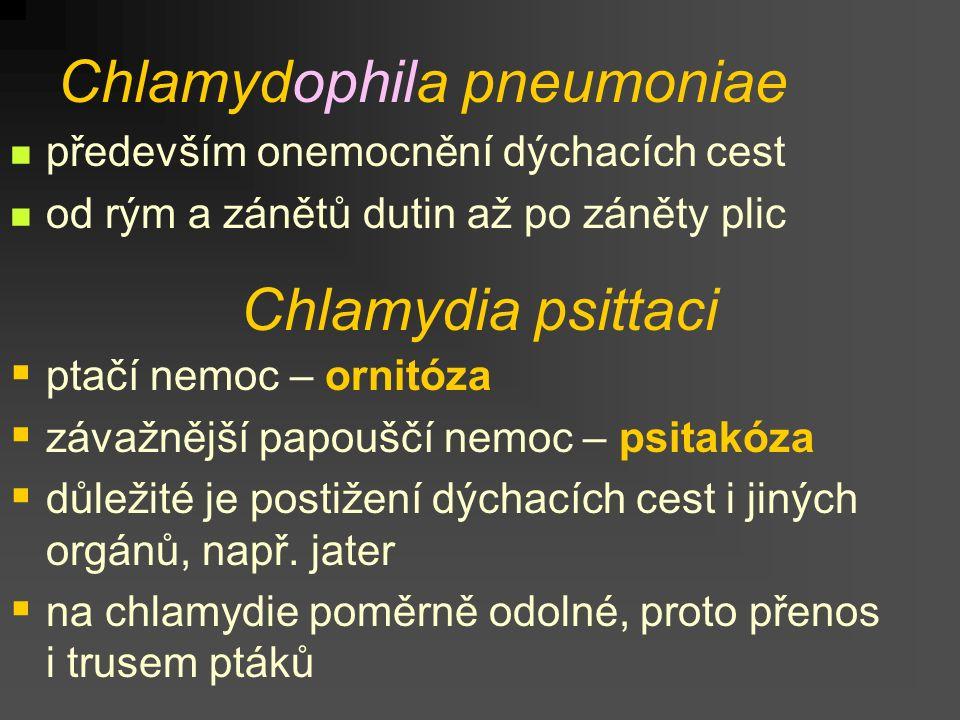 Chlamydophila pneumoniae především onemocnění dýchacích cest od rým a zánětů dutin až po záněty plic Chlamydia psittaci  ptačí nemoc – ornitóza  záv