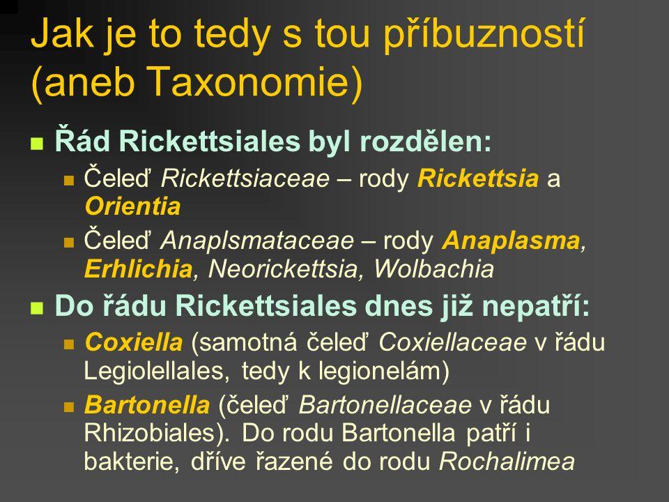 Jak je to tedy s tou příbuzností (aneb Taxonomie) Řád Rickettsiales byl rozdělen: Čeleď Rickettsiaceae – rody Rickettsia a Orientia Čeleď Anaplsmatace