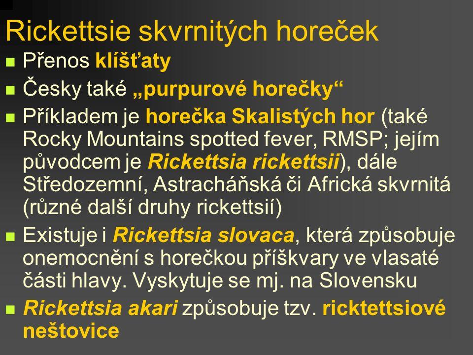 """Rickettsie skvrnitých horeček Přenos klíšťaty Česky také """"purpurové horečky"""" Příkladem je horečka Skalistých hor (také Rocky Mountains spotted fever,"""