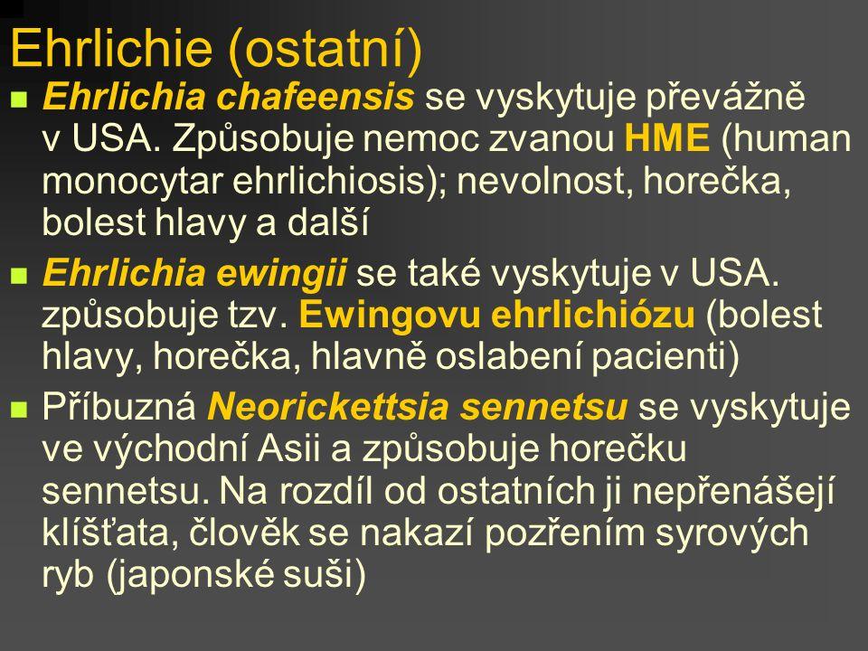 Ehrlichie (ostatní) Ehrlichia chafeensis se vyskytuje převážně v USA. Způsobuje nemoc zvanou HME (human monocytar ehrlichiosis); nevolnost, horečka, b