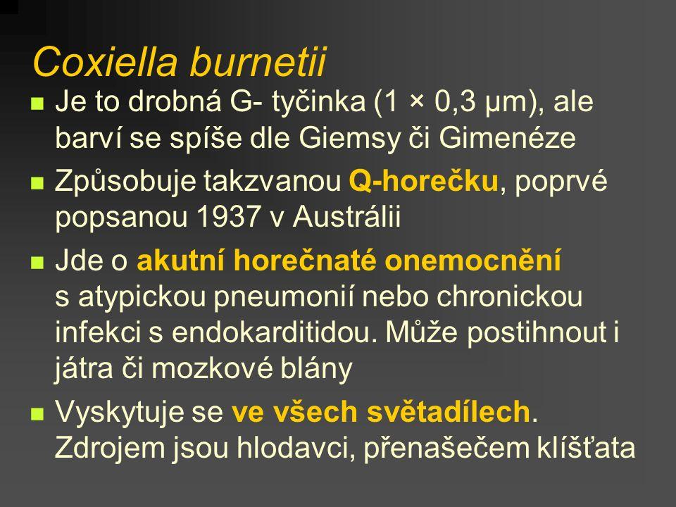 Coxiella burnetii Je to drobná G- tyčinka (1 × 0,3 µm), ale barví se spíše dle Giemsy či Gimenéze Způsobuje takzvanou Q-horečku, poprvé popsanou 1937