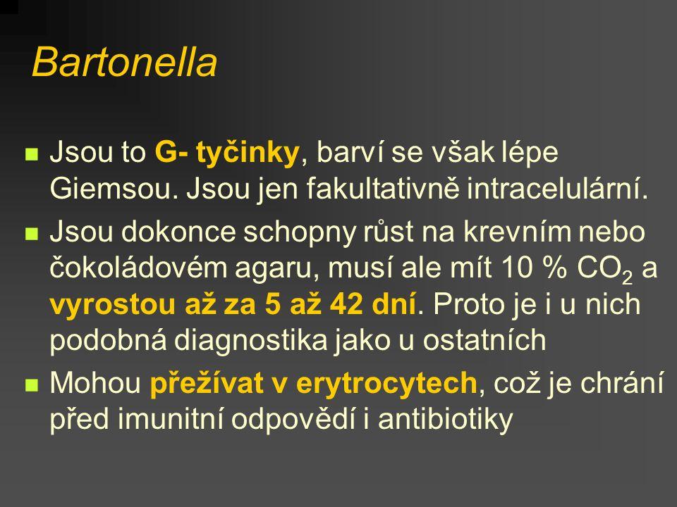 Bartonella Jsou to G- tyčinky, barví se však lépe Giemsou. Jsou jen fakultativně intracelulární. Jsou dokonce schopny růst na krevním nebo čokoládovém