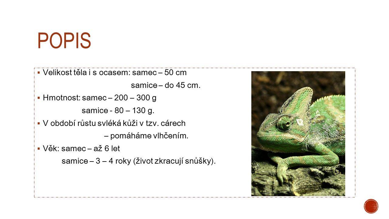 POPIS  Velikost těla i s ocasem: samec – 50 cm samice – do 45 cm.  Hmotnost: samec – 200 – 300 g samice - 80 – 130 g.  V období růstu svléká kůži v