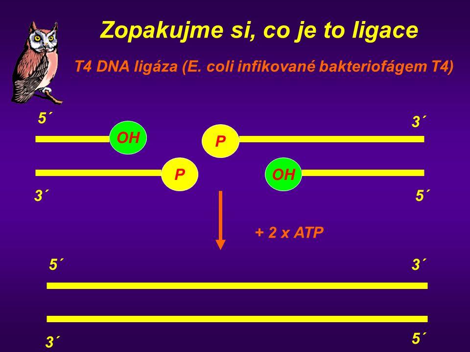 Zopakujme si, co je to ligace T4 DNA ligáza (E. coli infikované bakteriofágem T4) 5´ 3´ OH P 3´ 5´ OH P 5´ 3´ 5´ + 2 x ATP