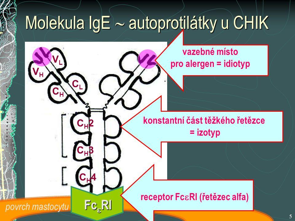 5 Molekula IgE  autoprotilátky u CHIK VLVL CLCL VHVH CH3CH3 CH4CH4 CH2CH2 CHCH vazebné místo pro alergen = idiotyp konstantní část těžkého řetězce = izotyp Fc  RI povrch mastocytu receptor Fc  RI (řetězec alfa)