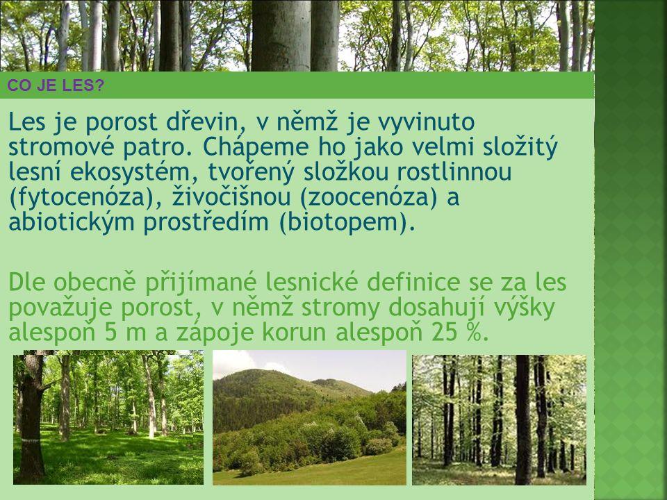 CO JE LES? Les je porost dřevin, v němž je vyvinuto stromové patro. Chápeme ho jako velmi složitý lesní ekosystém, tvořený složkou rostlinnou (fytocen