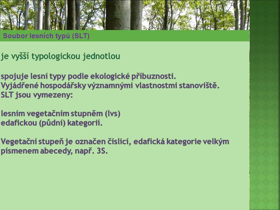 Soubor lesních typů (SLT)