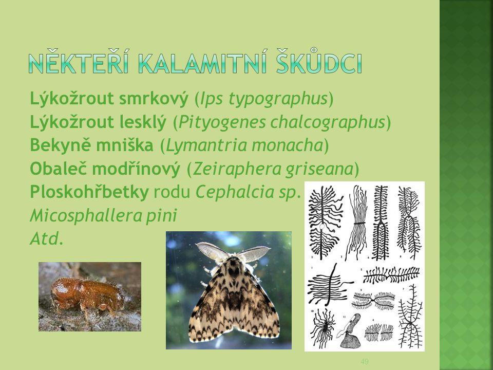 Lýkožrout smrkový (Ips typographus) Lýkožrout lesklý (Pityogenes chalcographus) Bekyně mniška (Lymantria monacha) Obaleč modřínový (Zeiraphera grisean