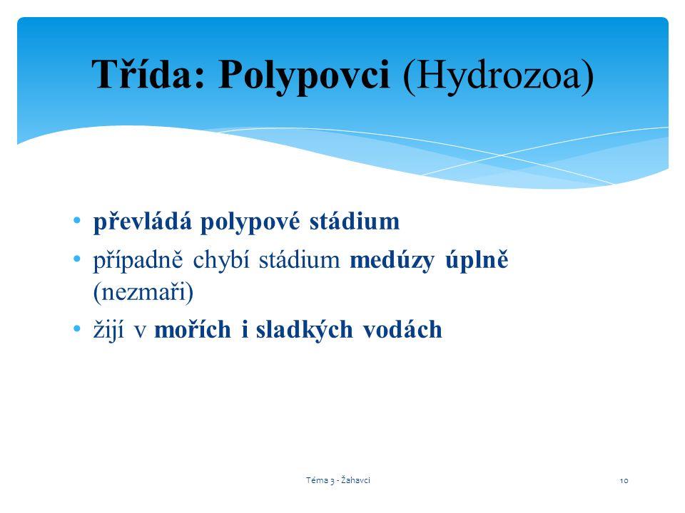 Třída: Polypovci (Hydrozoa) převládá polypové stádium případně chybí stádium medúzy úplně (nezmaři) žijí v mořích i sladkých vodách Téma 3 - Žahavci10