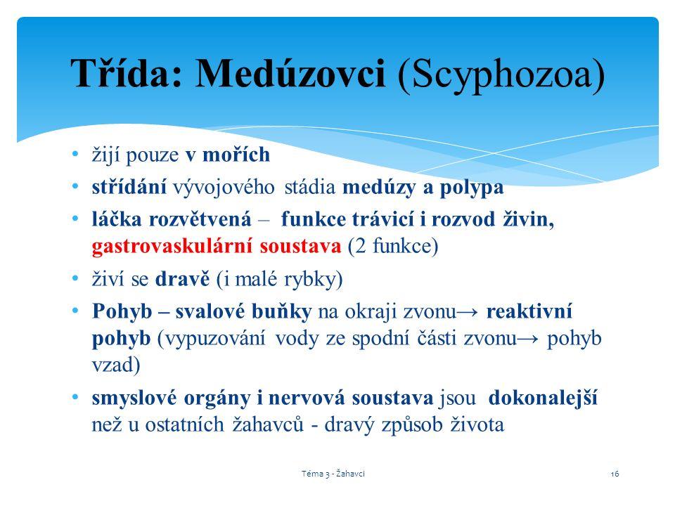 Třída: Medúzovci (Scyphozoa) žijí pouze v mořích střídání vývojového stádia medúzy a polypa láčka rozvětvená – funkce trávicí i rozvod živin, gastrova