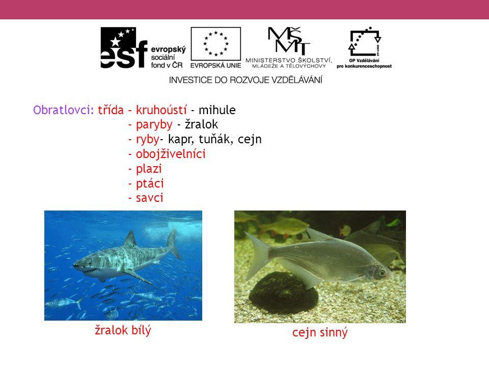 Obratlovci: třída – kruhoústí - mihule - paryby - žralok - ryby- kapr, tuňák, cejn - obojživelníci - plazi - ptáci - savci žralok bílý cejn sinný