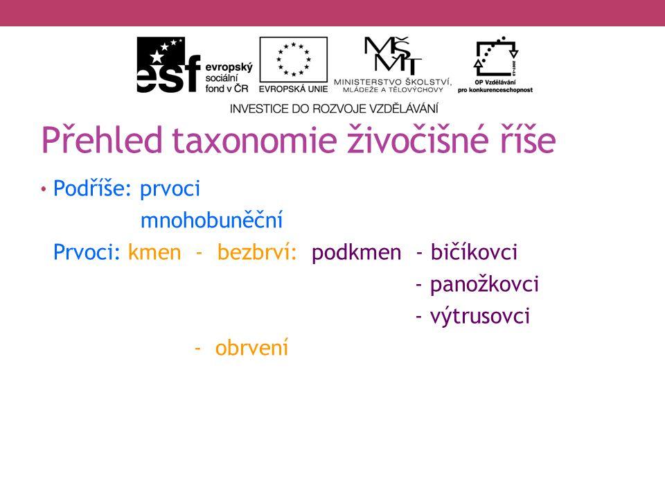 Přehled taxonomie živočišné říše Podříše: prvoci mnohobuněční Prvoci: kmen - bezbrví: podkmen - bičíkovci - panožkovci - výtrusovci - obrvení