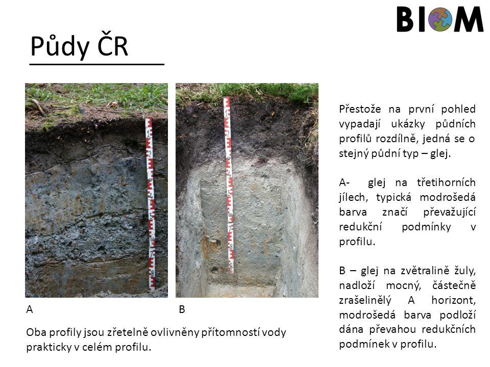 Půdy ČR Přestože na první pohled vypadají ukázky půdních profilů rozdílně, jedná se o stejný půdní typ – glej. A- glej na třetihorních jílech, typická