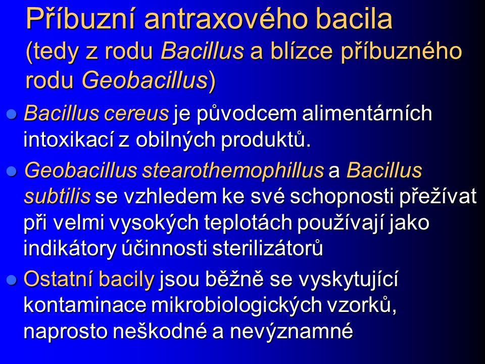 Příbuzní antraxového bacila (tedy z rodu Bacillus a blízce příbuzného rodu Geobacillus) Bacillus cereus je původcem alimentárních intoxikací z obilných produktů.