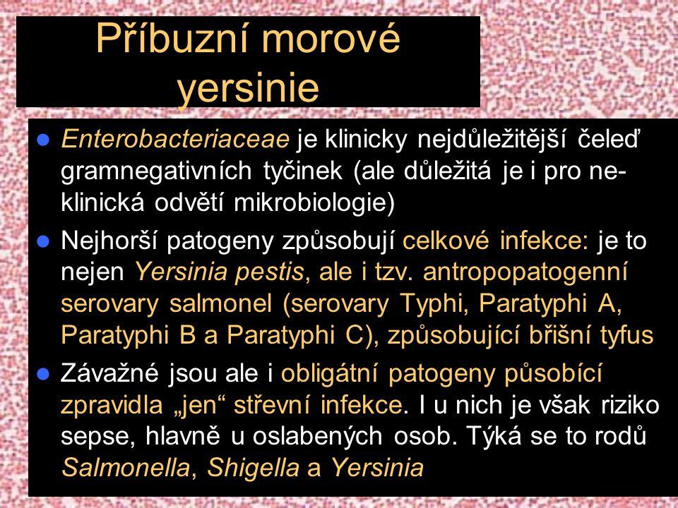 Příbuzní morové yersinie Enterobacteriaceae je klinicky nejdůležitější čeleď gramnegativních tyčinek (ale důležitá je i pro ne- klinická odvětí mikrobiologie) Nejhorší patogeny způsobují celkové infekce: je to nejen Yersinia pestis, ale i tzv.
