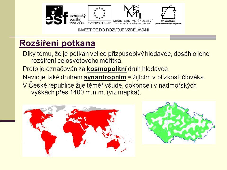 Rozšíření potkana Díky tomu, že je potkan velice přizpůsobivý hlodavec, dosáhlo jeho rozšíření celosvětového měřítka.