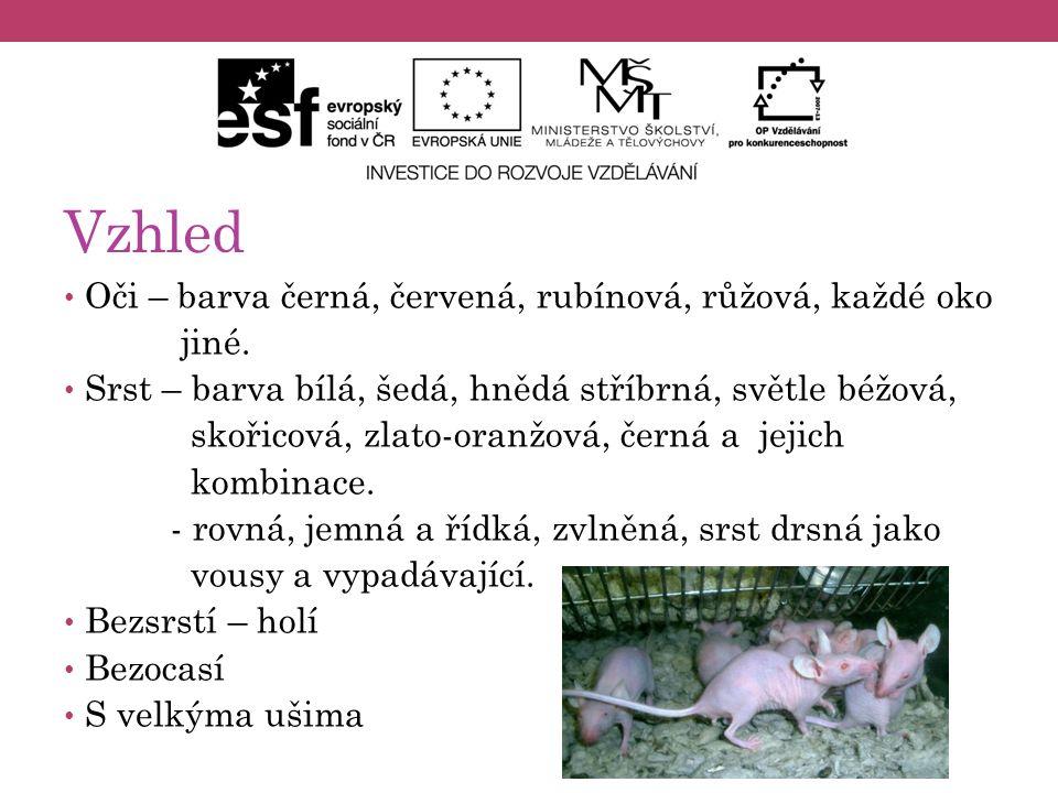 Výskyt potkana v ČR V Čechách se vyskytuje prakticky na celém území ve všech nadmořských výškách.