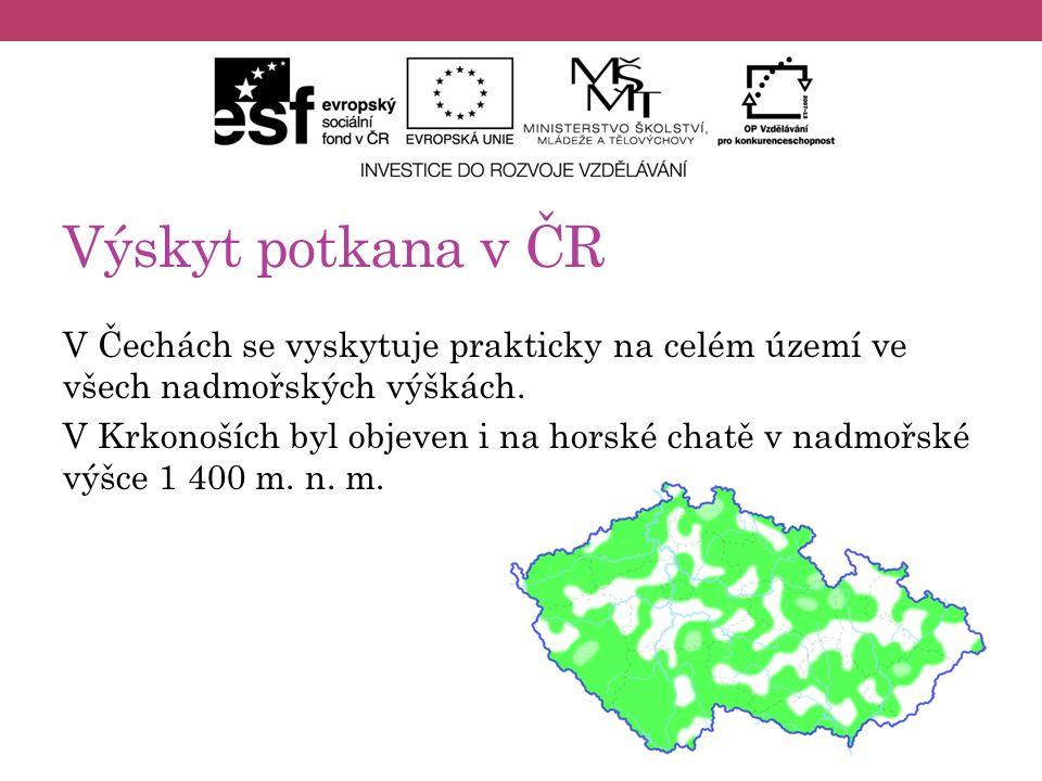 Výskyt potkana v ČR V Čechách se vyskytuje prakticky na celém území ve všech nadmořských výškách. V Krkonoších byl objeven i na horské chatě v nadmořs