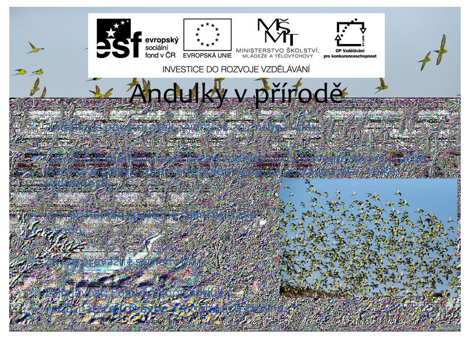  Andulka je pouštní pták, vydrží až 20 dní bez vody.  Obývá zalesněné porosty blízko vodních toků, travnaté savany, suché křovinaté oblasti i otevře