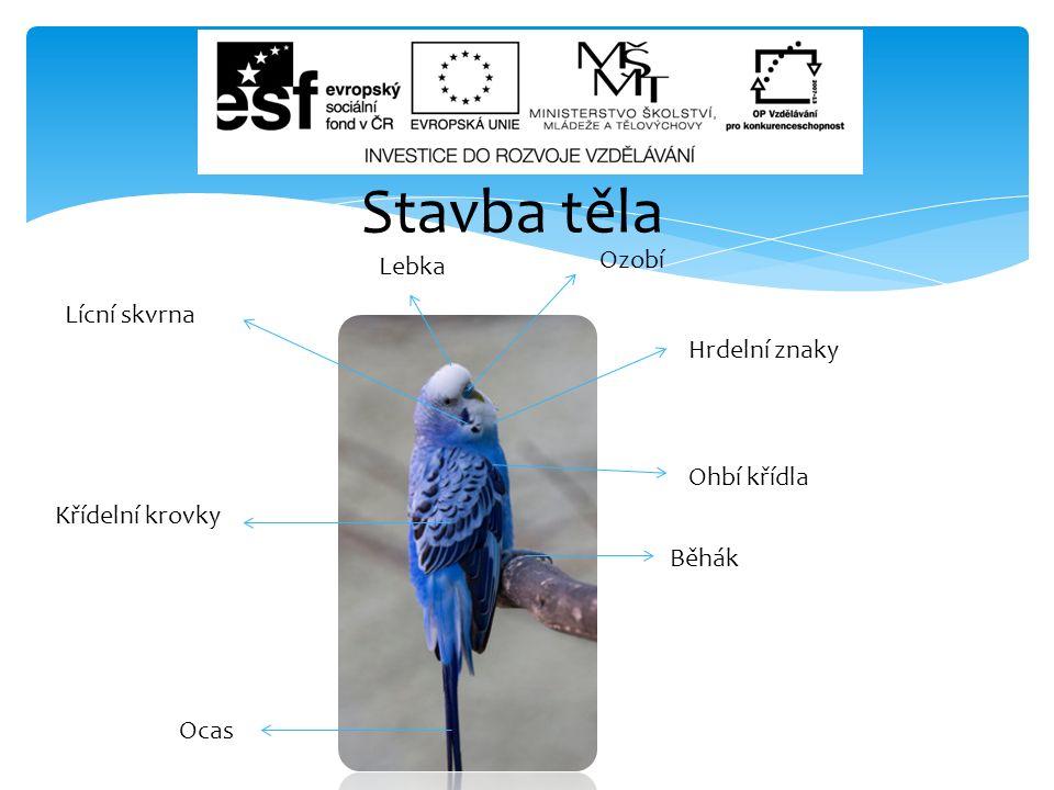  Slide 9 : ORIGINAL UPLOADER WAS.wikimedia.org [online].