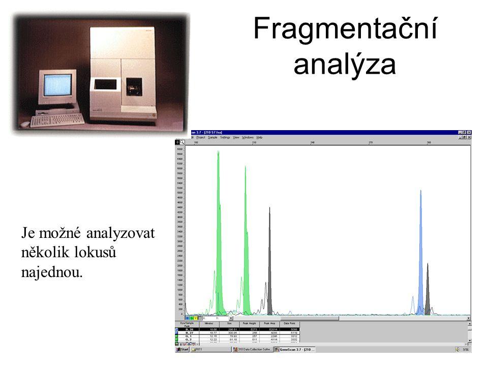 Fragmentační analýza Je možné analyzovat několik lokusů najednou.