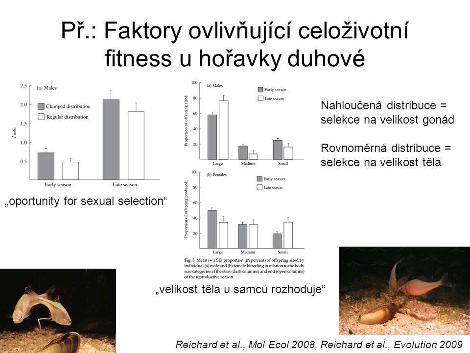 """Př.: Faktory ovlivňující celoživotní fitness u hořavky duhové Reichard et al., Mol Ecol 2008, Reichard et al., Evolution 2009 """"oportunity for sexual selection """"velikost těla u samců rozhoduje Nahloučená distribuce = selekce na velikost gonád Rovnoměrná distribuce = selekce na velikost těla"""