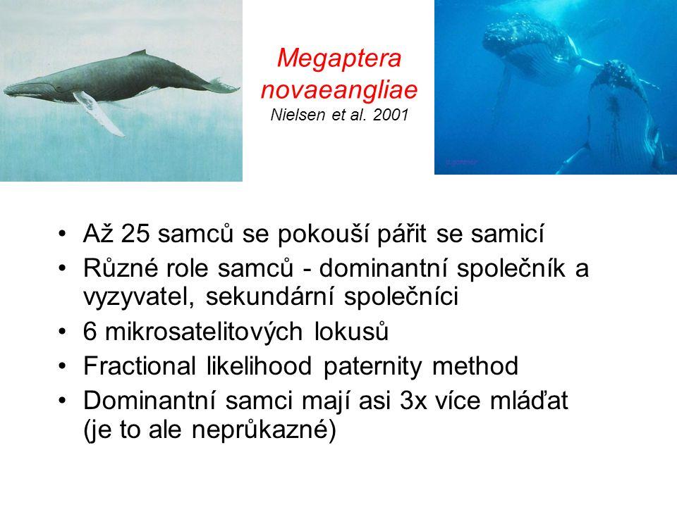 Megaptera novaeangliae Nielsen et al.