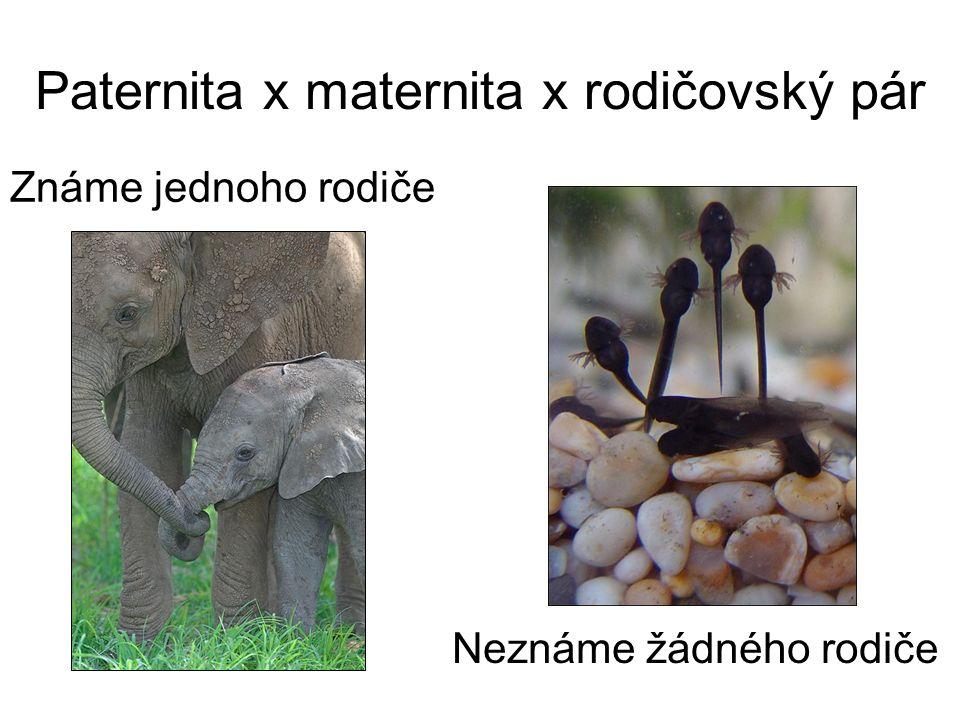 Paternita x maternita x rodičovský pár Známe jednoho rodiče Neznáme žádného rodiče