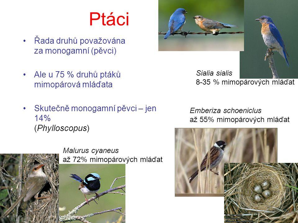 Ptáci Řada druhů považována za monogamní (pěvci) Ale u 75 % druhů ptáků mimopárová mláďata Skutečně monogamní pěvci – jen 14% (Phylloscopus) Sialia sialis 8-35 % mimopárových mláďat Emberiza schoeniclus až 55% mimopárových mláďat Malurus cyaneus až 72% mimopárových mláďat