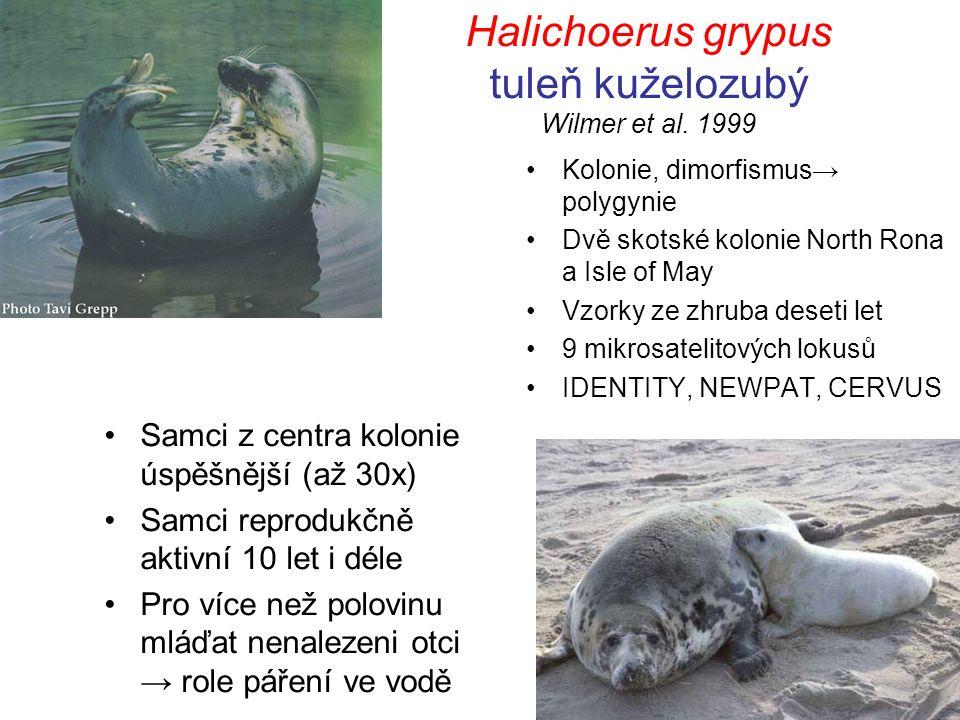 Halichoerus grypus tuleň kuželozubý Wilmer et al.